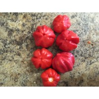 Habanero Gambia Red Pepper Seeds