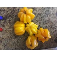 Aji Margaritino Yellow Pepper Seeds