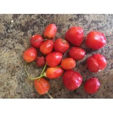 Inca Berry Pepper Seeds