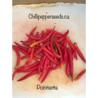 Pointsetta Pepper Seeds