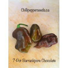 7-Pot Barrackpore Chocolate Pepper Seeds