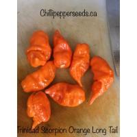 Trinidad Scorpion Long tail Orange