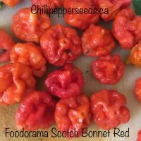 Foodorama Scotch Bonnet Red Pepper Seeds