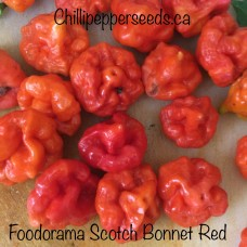 Foodorama Scotch Bonnet Red Pepper Seeds
