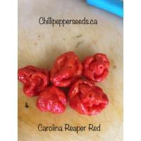 Carolina Reaper Red Pepper Seeds