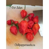 7-pot Julian Chilli Pepper Seeds