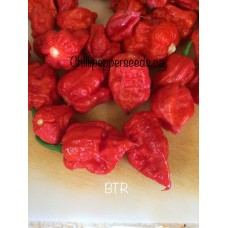 7-Pot BTR Chilli Pepper Seeds