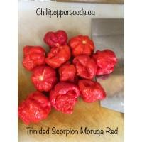 Trinidad Scorpion Moruga Red Chilli Pepper Seeds