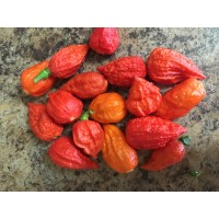 Red Tiger Gum x Chocolate Naga Brains Pepper Seeds