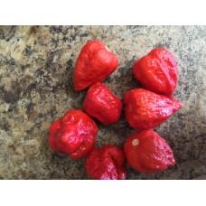 7-Pot Congo Red Pepper Seeds