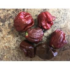 7-Pot Lava Chocolate Pepper Seeds