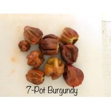 7-Pot Burgundy Pepper Seeds