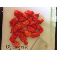 Big Bang Red Pepper Seeds