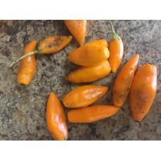 Baum Chilli Orange Pepper Seeds