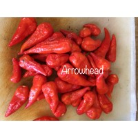 Arrowhead Pepper