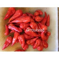 Arrowhead Pepper