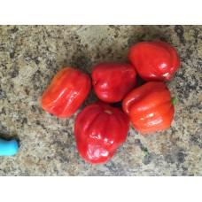Tobago Seasoning Pepper Seeds