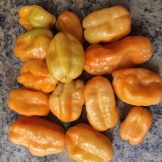 Pimenta Pera Orange Pepper Seeds