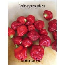 Tasmanian Red