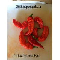 Trinidad Hornet Chilli Pepper Seeds
