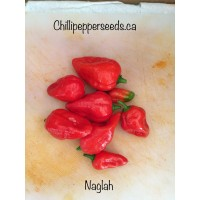 Nagalah Chilli Pepper Seeds