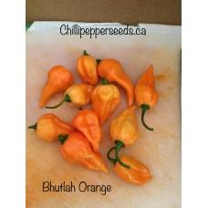Bhutlah Orange Chilli Pepper Seeds