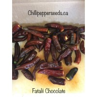 Fatalii Chocolate Pepper Seeds