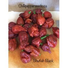 Bhutlah Black Chilli Pepper Seeds
