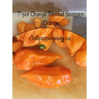 7-Pot Orange X Trinidad Scorpion Orange Pepper Seeds