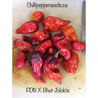 PDN X Bhut Jolokia Pepper Seeds