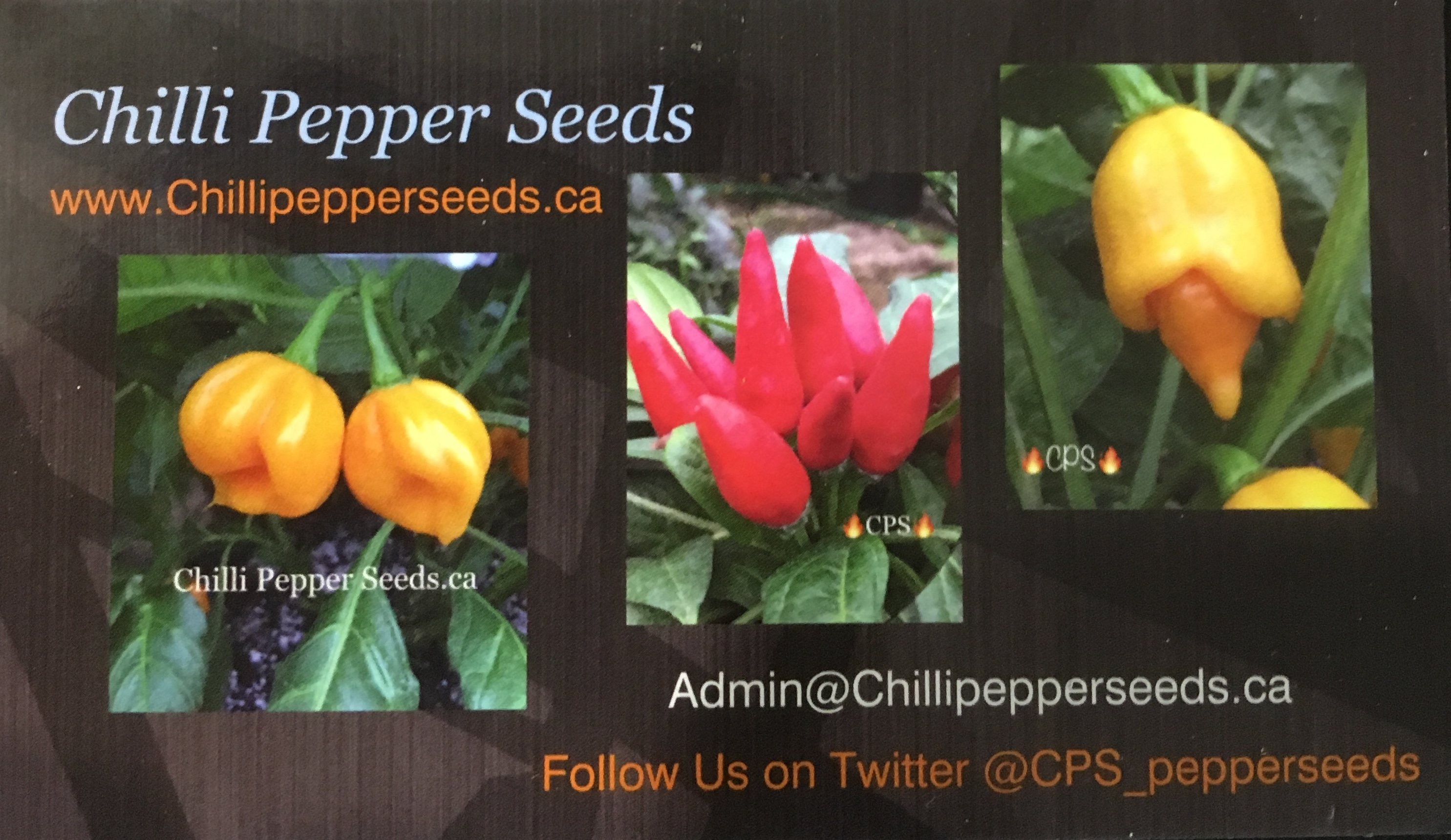 Chilli Pepper Seeds